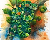 Beautiful Reptile Snake, original watercolour painting, temple viper, Tropidolaemus Wagleri