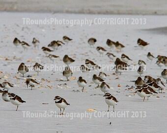 Birds-N-Beach No 753