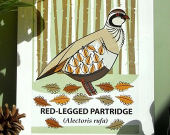 Small Limited Edition Red-Legged Partridge Giclée Print