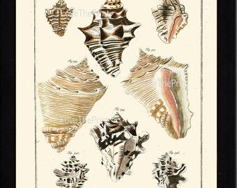 SHELL PRINT MARTINI  Art Print 19 Beautiful Antique Murices Shells Sea Ocean Nature to Frame Home Decoration Seashell