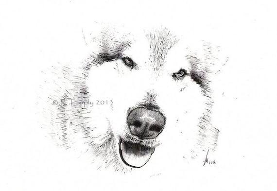 Stunning Alaskan Malamute Pencil Sketch Art Print 115x85