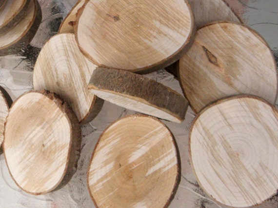 Ash tree wood slices cookies blanks rounds