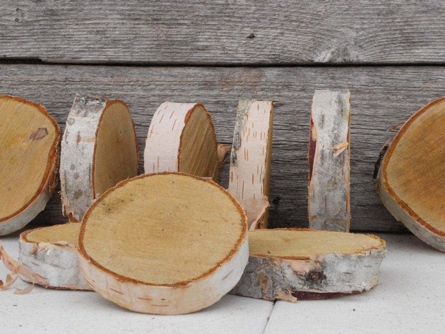 White birch wood diameter