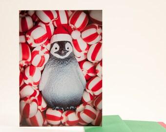 Penguin Peppermint Dreams: Christmas Card