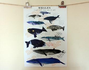 Whale Poster // Watercolour Illustration // A3 Print
