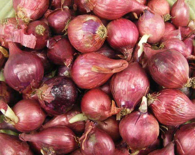 Red Onion Sets Organic | Red Baron Onion Sets Spring Shipping 32 Pounds Bulk Non-GMO