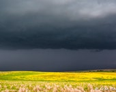 Great Plains Photography, Yellow Print, Simply Spring, Spring Season, Yellow Flowers, Fields of Yellow, Spring, Colorful Fields, Art