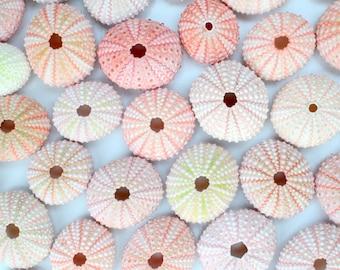 75 Natural Pink Sea Urchin Shells for Beach Wedding or Air plants- Bulk Craft Supplies, Vase Filler, Seashell Nautical Ocean Life