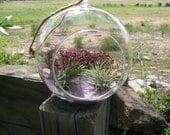 6inch Hanging air plant terrarium