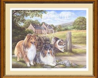 SHETLAND SHEEPDOG Shelties dog print by Lynn Paterson