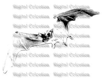 Vampire Bat Halloween. Vampire PNG. Bat PNG. Halloween PNG. Vampire Bat Print. Vampire Bat Image. Vampire Bat Picture. Bat Clipart No. 0080