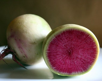 Chinese Radish, Red Meat (OP) Seeds ~AKA,Watermelon Radish , Roseheart Radish or China Rose . Organic Heirloom (Open Pollinated)