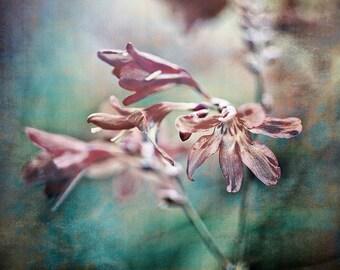 Nature Photography, Flowers, Crocosmia, Pink, Dreamy, Fine Art print, Home Decor.