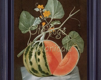 BOTANICAL Print 8x10 Vintage Antique Kitchen Art Fruits Watermelon Polignac Melon BROOKSHAW Wall Art Home Decor to Frame Red Green FV0005