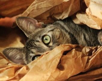 Cat Hiding- 5x7 print