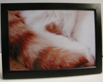 5x7 Framed macro photograph of Cat Tail
