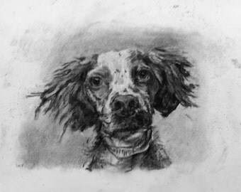 Pet Portrait - Charcoal