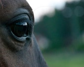 Beautiful macro photo of horse's eye. Printed on canvas. Nature photo. High quality photography of horse.