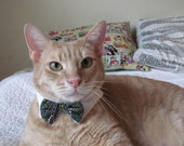 Classy cat white shirt collar & dotted bowtie