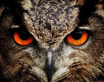 Popular Items For Owl With Red Eyes On Etsy