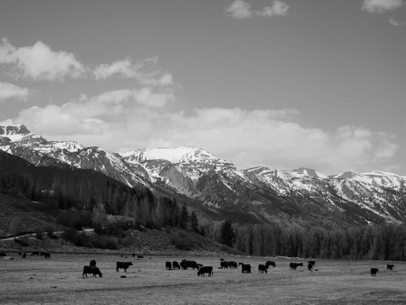 Grazing: Grand Teton National Park