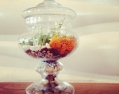 Special Order for Kristen Made to Order Custom Live Succulent Apothecary Jar Terrarium Wedding Bridal Baby Shower Centerpiece