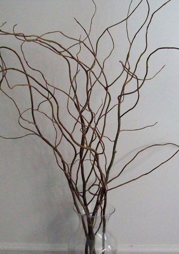 Http Www Etsy Com Listing 183824989 100 3 Ft Curly Willow Branches Home