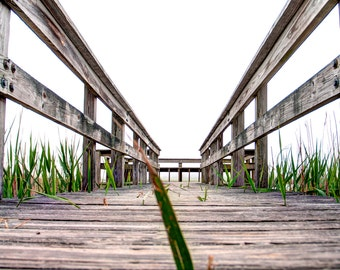 Nature Photography - Dock Photography - Scituate, MA - Blade of Grass
