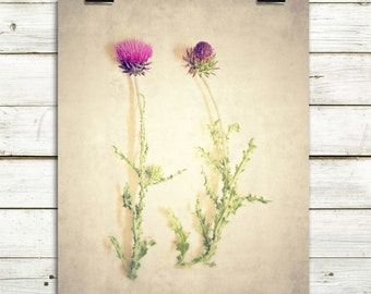 pink thistles, nature photography, fine art photography, rustic wall art, rustic home decor, large wall art, canvas wall art, nature prints