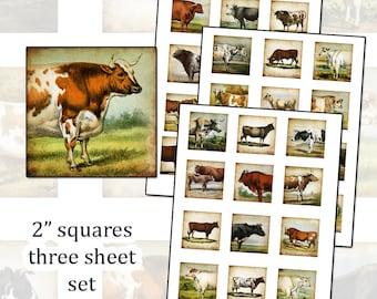 Antique Cows 2 inch square digital collage sheet 50mm 2x2 farm animal THREE SHEET SET