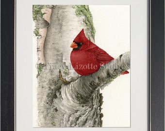 Cardinal In Birch Tree - archival watercolor print by Tracy Lizotte