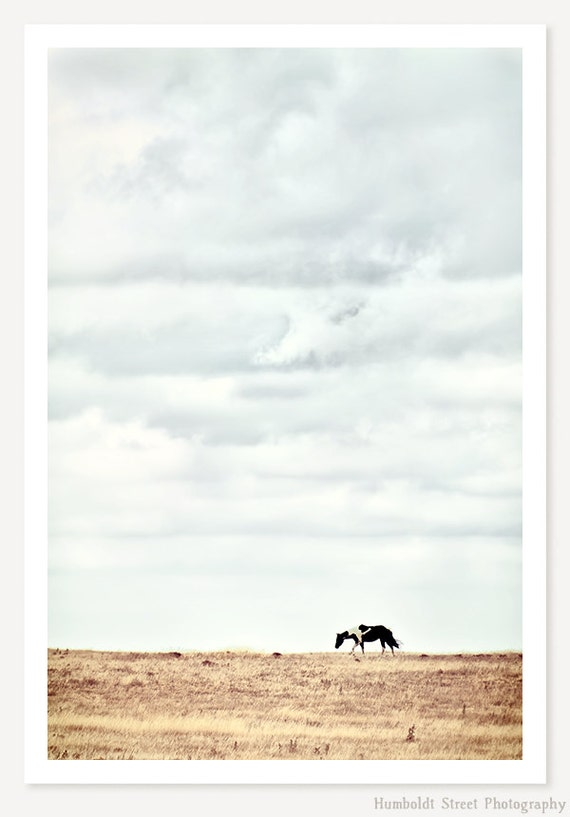 Pinto - Horse Photograph - Rustic Horse Photo - Minimalist Horse Art Print - Western Art - Animal Photography - Farmhouse Decor