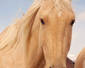 Palomino Horse photograph in color, Equestrian Wall Art