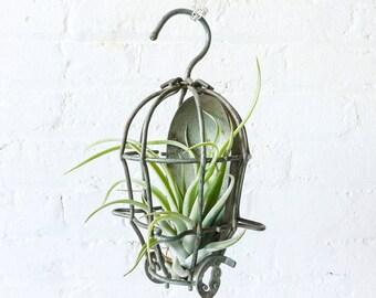 Industrial Air Plant Garden Cage Hanger - SteamPunk Garden Terrarium - Hanging Plants Spring Tillandsia Ornament - Nursery Gardener
