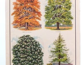 Trees Botanical Print, Vintage Classroom Chart, Home Decor, Macmillans Nature Class Posters, Vintage Print, Picture of Trees, School Poster