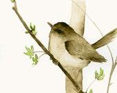 Watercolor Bird Art Print Little Brown Bird