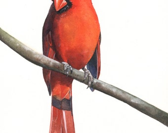 Cardinal Bird watercolor painting A4 print wall art print - bird art - art print - wildlife print