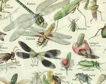 1948 Vintage insect print Vintage insect art Antique insect illustration Bugs poster Insects poster Entomology bug decor classroom decor