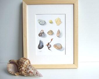 Aquarelle Coquillages et galets, reproduction d'une illustration naturaliste - Décoration maison de plage - Tirage sur papier d'art