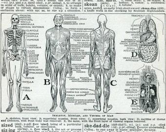 Human Body Anatomy Vintage Dictionary Print Medical Skeleton Internal Organs