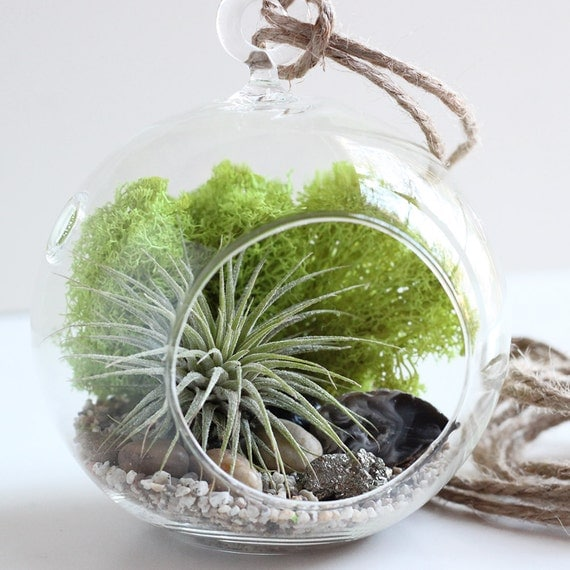 Geode and Pyrite Air Plant Terrarium Kit with Reindeer Moss || Small Round