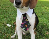 Dog/Cat skull and crossbone necktie/bowtie on a shirt style collar