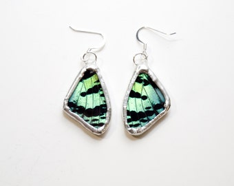 FREE SHIPPING  Real Sunset moth Wings Encased in Hand Cut Glass and Soldered Earrings