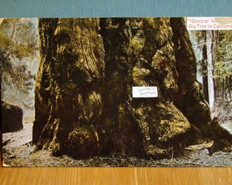 Vintage Postcard, General Sherman Tree, California 1910s Paper Ephemera