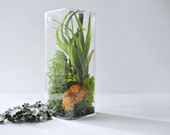 TOP SELLER Air Colors Large Air Cube Terrarium - Air Plant, Tillandsia, Living Home Decor, Gift ,  Cube, Lichen , Reindeer Moss
