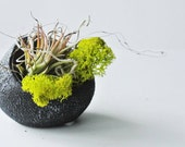 Rapid Stones Air Plant Terrarium -   Air Plant, Tillandsia, Living Home Decor, Gift , Lichen , Reindeer Moss