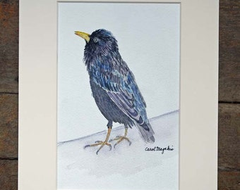 "Starling - 5""x7'- Watercolor Painting"