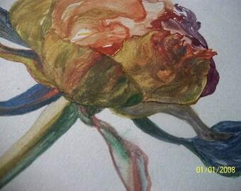 peonia-watercolour ilustration-flower,nature,peony,wild,strong,leaf,aqua,painting,original,art,paper,blue,green,orange,grey,colourful,set
