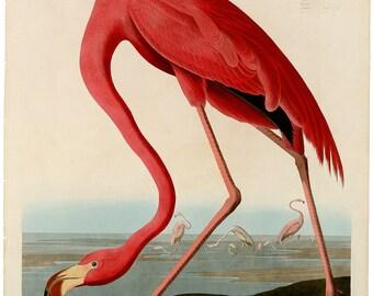 "John James Audubon's ""Birds of America,"" Plate #431: ""American Flamingo"" - Giclee Fine Art Print"
