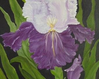 Purple and White Iris Flower